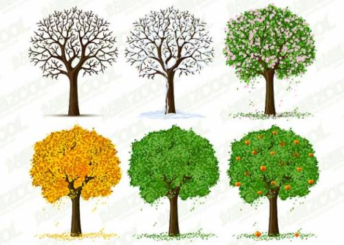 شجرة عبر فصول السنة